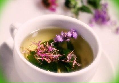 как пить иван чай для похудения